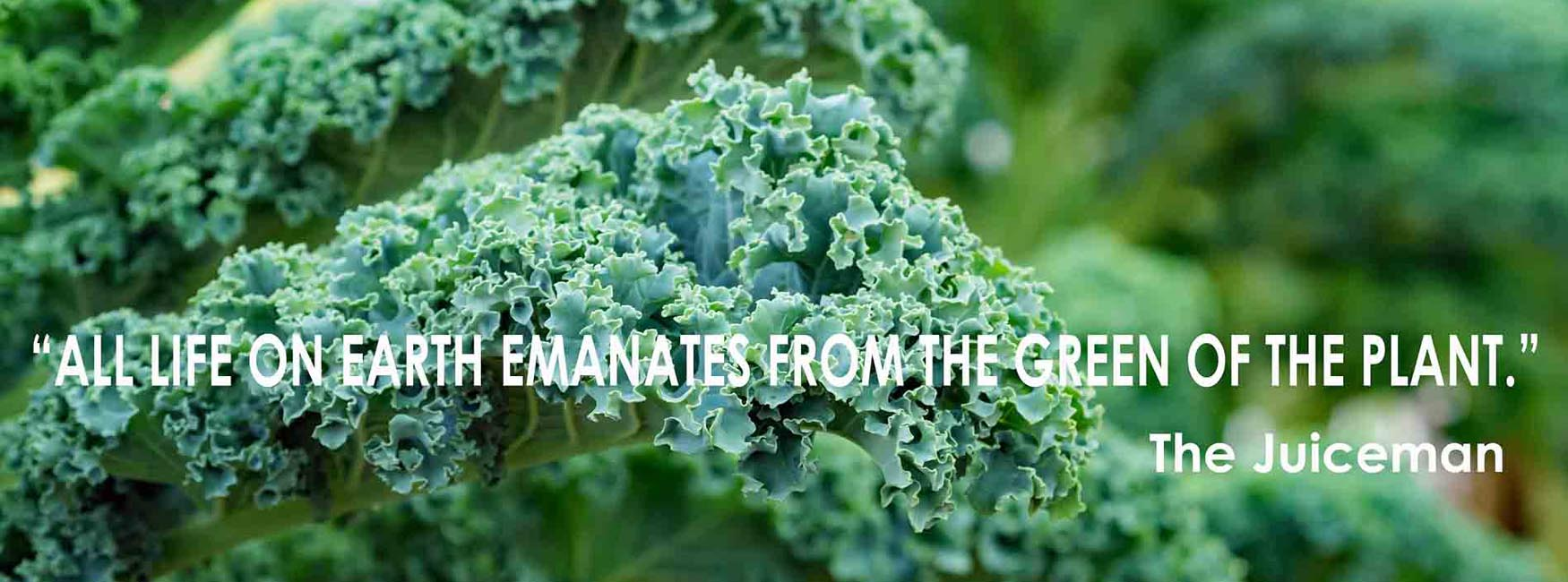 Kale adds healthy variety to your diet.