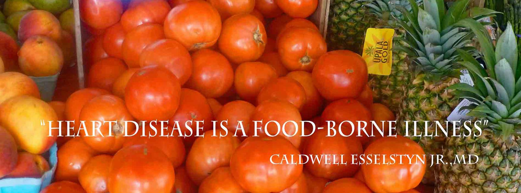 Plant based foods are the healthiest you can eat.